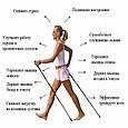 Телескопические трекинг палки для скандинавской ходьбы трекинговые палки скандинавские (пара) (GK), фото 7