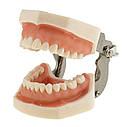 Модель челюсти человека со съемными зубами, фото 3