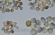 ракушки скафарки белой  и сердцевидки от  0,8  до 2,5 см