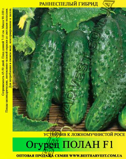 Семена огурца Полан F1 0,5 кг