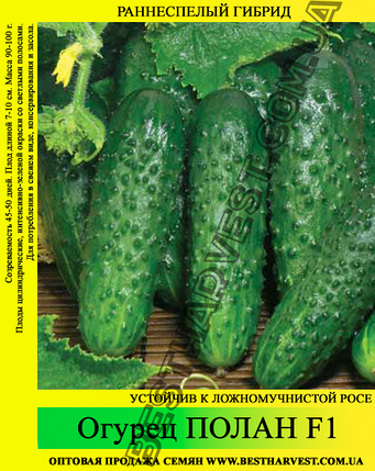 Семена огурца Полан F1 0,5 кг, фото 2
