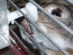 Готовые комплекты для кролиководства