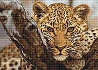 """Набор для вышивания крестом """"Luca-s"""" B525 Леопард"""
