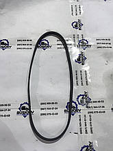 Ремень водяного насоса Ford Transit Custom с 2012- год GK2Q-6C301-CA
