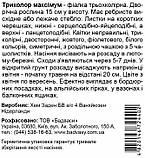 Виола Триколор Максимум смесь Hem Zaden Голландия 0,05 грамм, фото 4