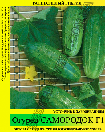 Семена огурца Самородок F1 0,5 кг, фото 2