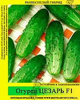 Семена огурца Цезарь F1 0,5 кг