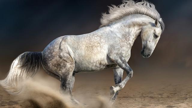 Товари для коней