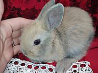 Кролики. Торчеухие. Малыши. Самцы и самки. Грызун.