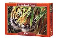 """Пазлы Castorland """"Взгляд тигра"""" - 1500 элементов."""