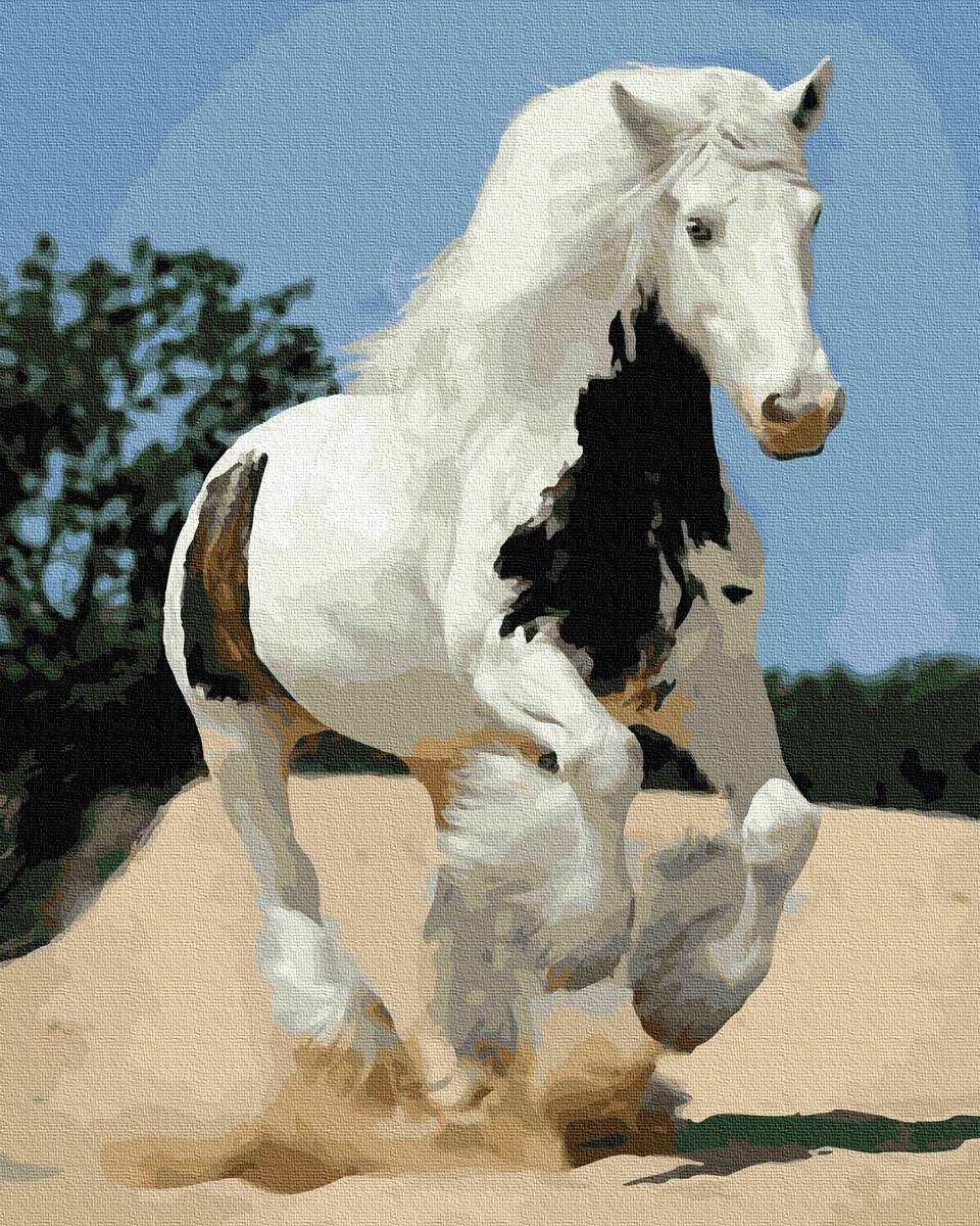 Картина по номерам Белый конь  без коробки, Никитошка, 40*50 см
