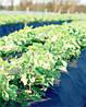 Агроволокно спанбонд Premium-agro (Польша) 1,1/100 50 г/м2 Черное(мульча)