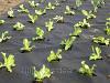 Агроволокно спанбонд Premium-agro (Польша) 3,2/100 50 г/м2 черное(мульча)