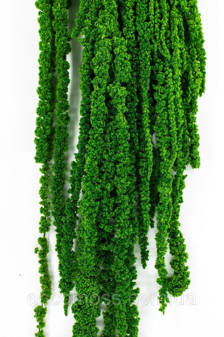Стабилизированный Амарант зеленый 60 см Moss Nature100гр