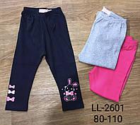 Лосини для дівчаток Sincere оптом, 80-110 pp. Артикул: LL2601