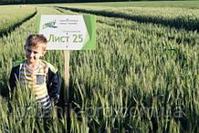 Семена озимой пшеницы Лист 25 элита