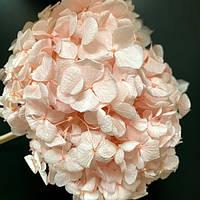 Стабилизированная Гортензия лиловая 15 см Moss Nature