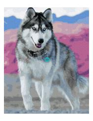Голубоглазый хаски - Картины по номерам   Rainbow Art™ 40х50 см.   GX30393
