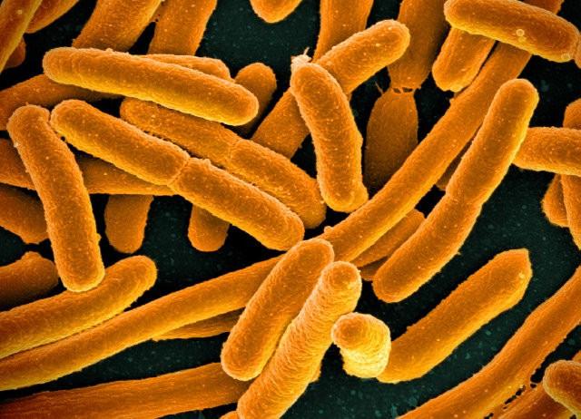 мобильный телефон переносчик бактерий