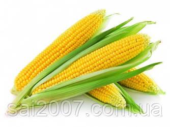Насіння кукурузи Дніпровський 181 СВ ФАО 180