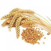 Зерно пшеницы 1 кг