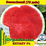 Семена, арбуз бессемянный, ЭКСТАЗИ F1, ТМ Нazera (Израиль) проф. пакет 500 семян, фото 2