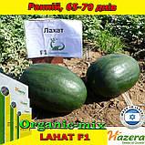 Семена, арбуз черный, ЛАХАТ F1 / LAHAT F1 ТМ Hazera (Израиль), 500 семян, фото 2