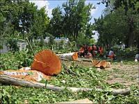 Расчистка участков от деревьев