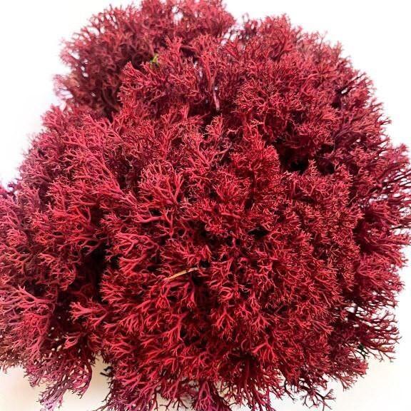 Стабилизированный мох Красный Ягель Украинский 500 г Green Ecco Moss