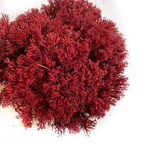 Стабилизированный мох Красный Ягель Украинский 500 г Green Ecco Moss, фото 2