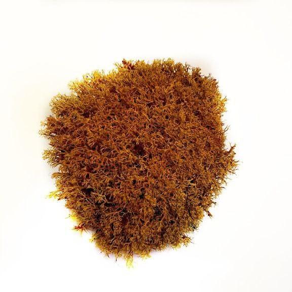 Стабілізований мох Помаранчевий Ягель Український 100 г Green Ecco Moss