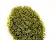 Стабилизированный мох Хаки Ягель Украинский 500 г Green Ecco Moss, фото 2