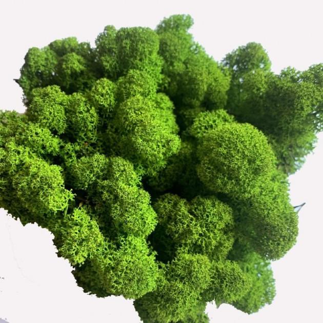 Стабилизированный мох Ягель Норвежский Зеленое яблоко 100 г Green Ecco Moss