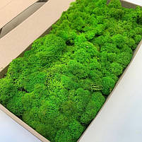 Стабілізований лишайник Ягель Норвезький Зелене яблуко 250 г Green Ecco Moss, фото 2