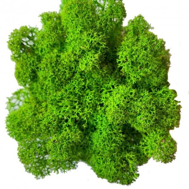 Стабілізований мох Зелений Ягель Норвезький 1 кг Green Ecco Moss