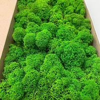 Стабілізований мох Зелений Ягель Норвезький 1 кг Green Ecco Moss, фото 2