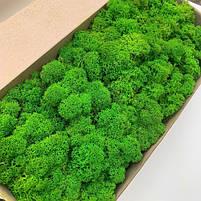 Стабілізований мох Зелений Ягель Норвезький 1 кг Green Ecco Moss, фото 3