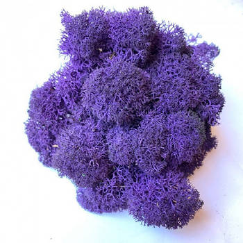 Стабилизированный мох Фиолетовый Ягель Норвежский 1 кг Green Ecco Moss