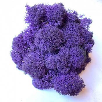 Стабилизированный мох Фиолетовый Ягель Норвежский 500 г Green Ecco Moss
