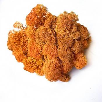 Стабилизированный мох Оранжевый Ягель Норвежский 100 г Green Ecco Moss