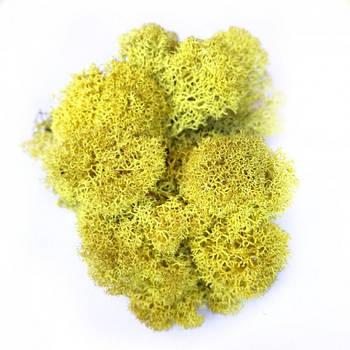 Стабилизированный мох Желтый Ягель Норвежский 100 г Green Ecco Moss