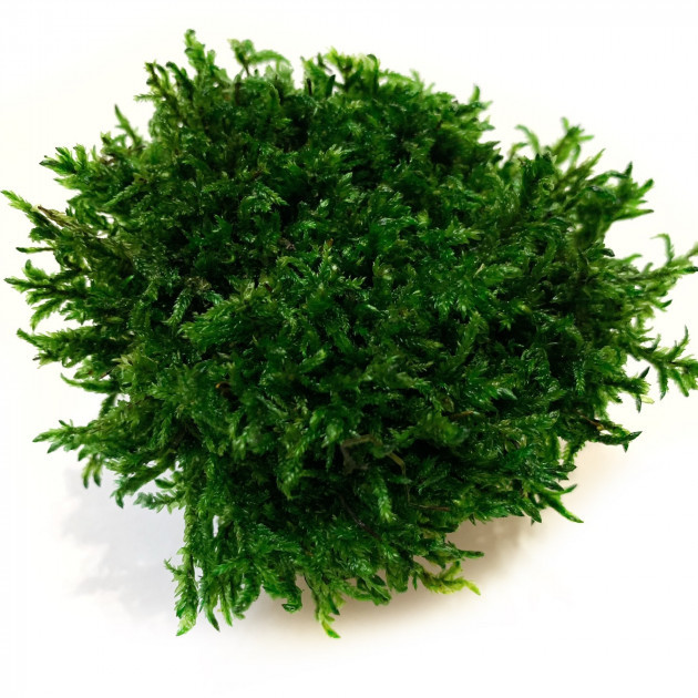Стабилизированный мох Прованс Обыкновенный 250 г Green Ecco Moss