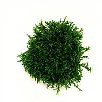 Стабилизированный мох Прованс Обыкновенный 250 г Green Ecco Moss, фото 2