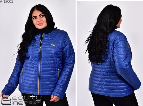 Синяя демисезонная куртка в батальном размере Размеры: 42.44.46.48.50.52.54.56.58.60.62.64.66., фото 2
