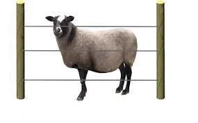 Заграждение электрическое (электропастух) для овец