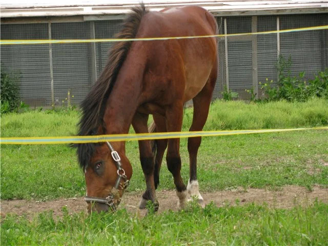 Електричне огорожу для коней
