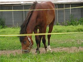 Электрическое ограждение для коней