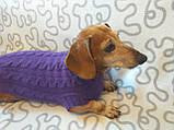 Фиолетовый свитер для таксы или маленькой собаки, фото 6