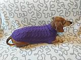 Фиолетовый свитер для таксы или маленькой собаки, фото 3