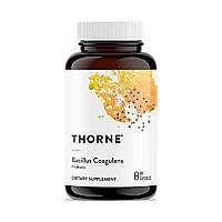 Пробиотики, Bacillus Coagulans, Thorne Research, 60 Капсул